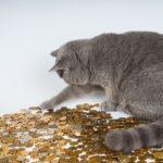 A melhor forma de ganhar dinheiro na internet (Conversa sem mimimi)